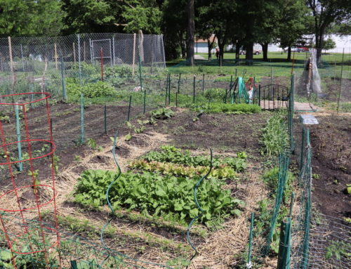 Community Crops Annual Garden Gala on June 8