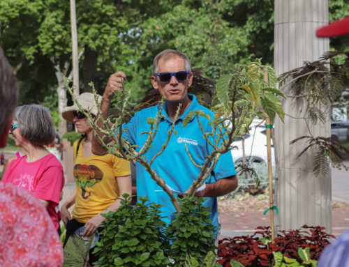 How's It Growin'? Garden Talk series continues Sept. 21 with A Celebration of Herbs